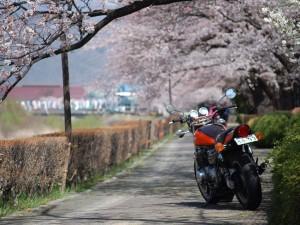 丸子依田川桜並木