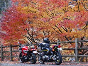 妙義山紅葉
